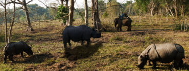 Chitwan National Park 2N 3D Budget Tour
