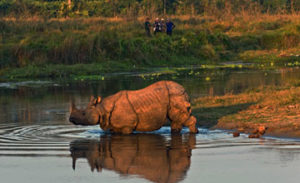 Activities in Chitwan