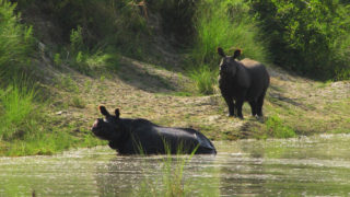 Bardiya National Park 2N 3D Trip