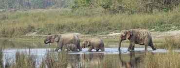 Bardiya National Park 3N 4D Trip