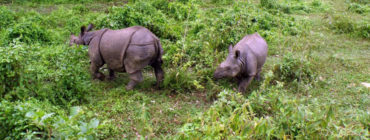 Bardiya National Park 4N 5D Tour