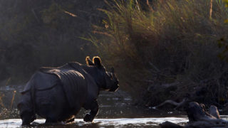 Chitwan National Park 4N 5D Luxury Tour