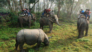 Chitwan National Park 4N 5D Budget Tour