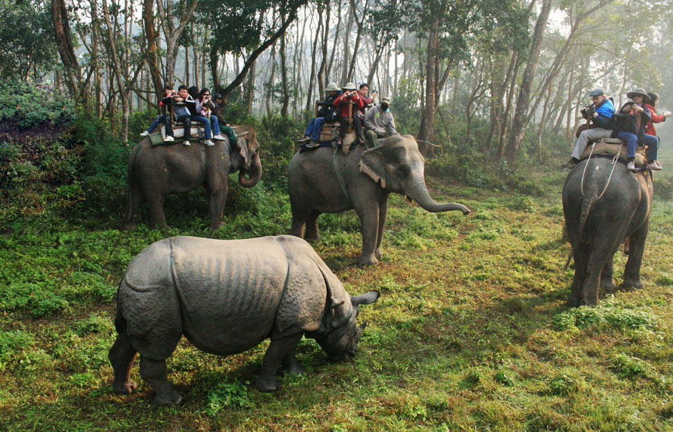 Chitwan National Park | Chitwan Jungle Activities | Sauraha