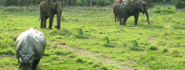 Chitwan National Park 3N 4D Budget Tour