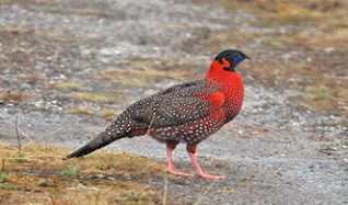 BHUTAN BIRD WATCHING TOURS